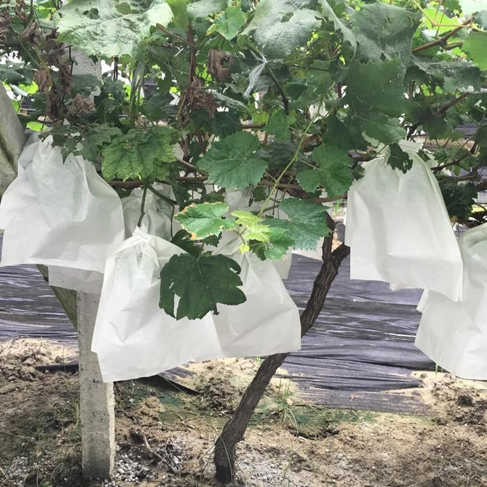 Nonwoven fabric for banana grape fruit protection bags,fruit cover bags