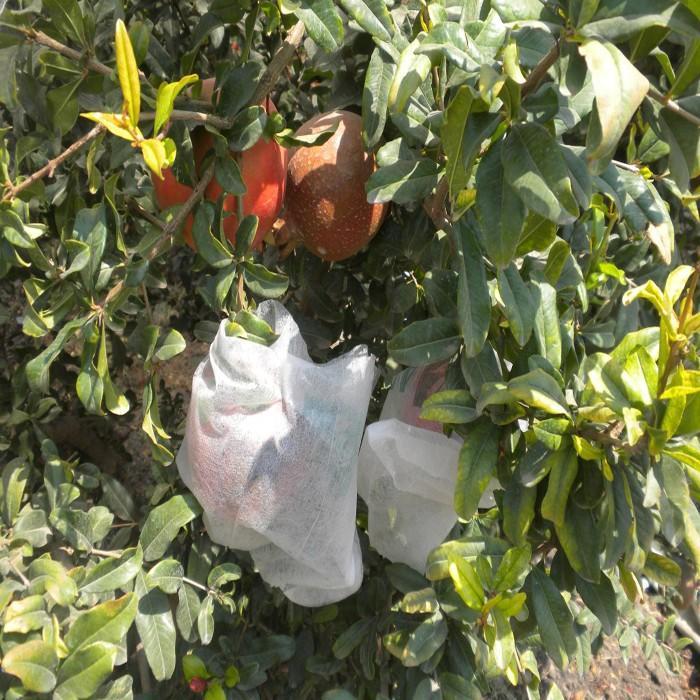 Polypropylene Spunbond nonwoven fabric for vegetable and fruit bag