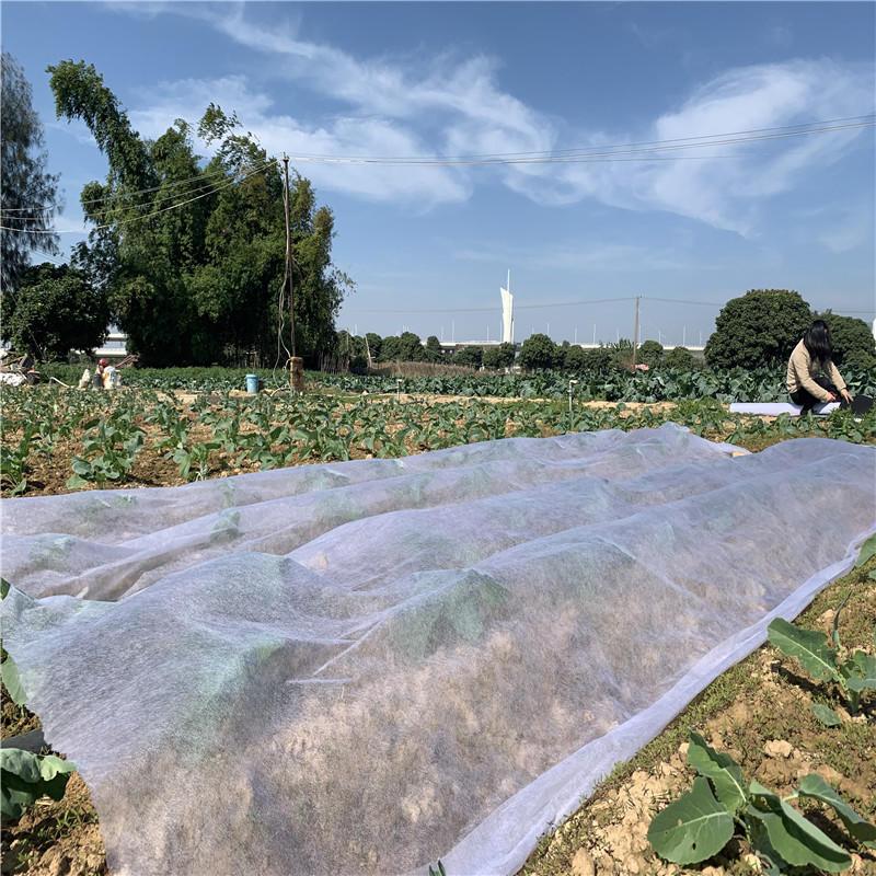 Sunshine Supply Non woven Landscape Fabric/Plant Cover Fabric