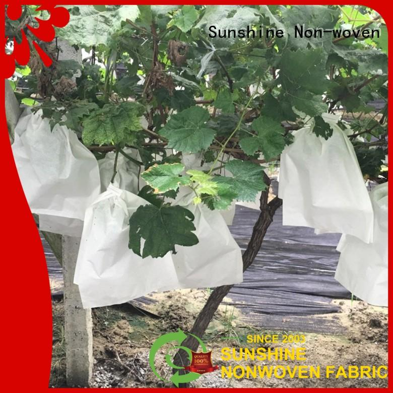 Sunshine grape banana bunch cover from China for fruit
